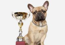 AAA Pet Travel Photo Contest 2018