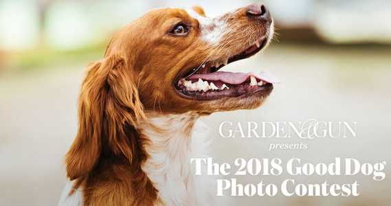 Garden and Gun Dog Photo Contest