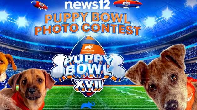 News 12 Puppy Bowl Contest 2021