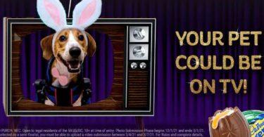 Cadbury Pet Contest 2021