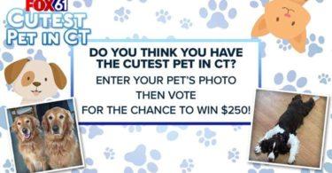 Fox61 Cutest Pet Contest 2021