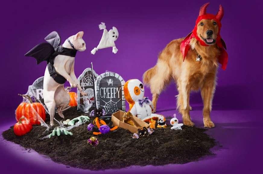 Petco Halloween Contest 2021