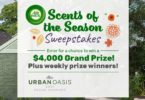 TLC Air Wick Scents of the Season Sweepstakes 2021
